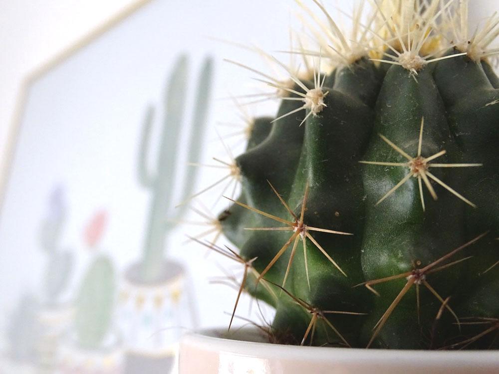 Kaktus DIY basteln Kaktusständer